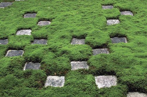 Jedan od nekoliko zen vrtova unutar hramskog kompleksa Tofuku u Kyotu.