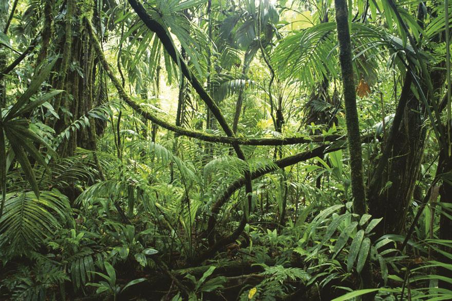 jungle_01