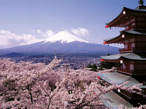 FUJI_Cherry_Blossoms_and_Mount