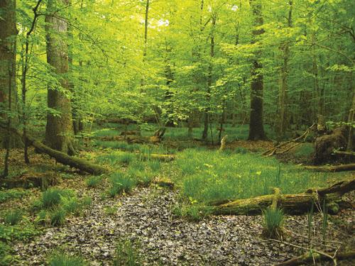 INTUICIJA_Suma Krakovski gozd