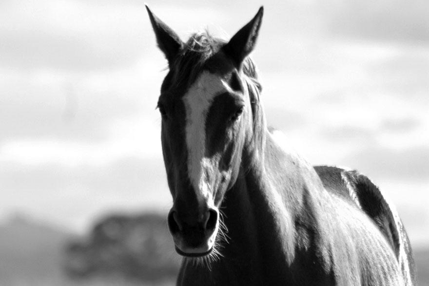 KRATKA PRICA_Konj