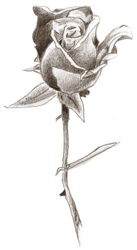 Izlazak iz pustinjske ruže