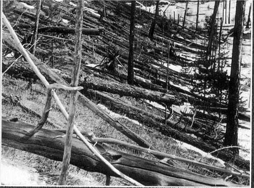 Snimka srušenog drveća