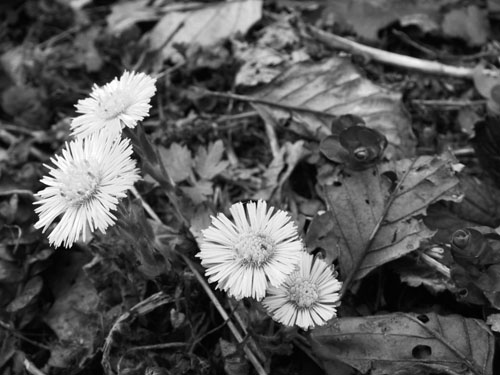 cvijece_cb
