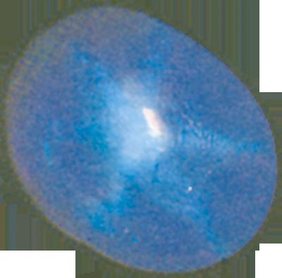 Safirna zvijezda