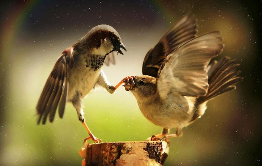 Francis Bacon - O razgovoru - ptice