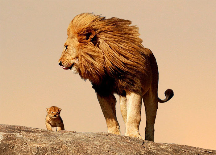 Lav i lavić