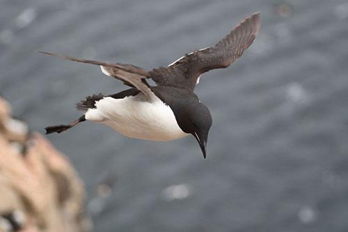 Ptica u letu
