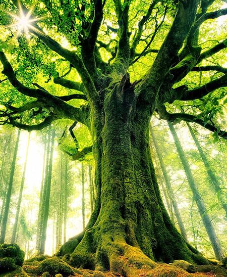 mitologija-drveca5