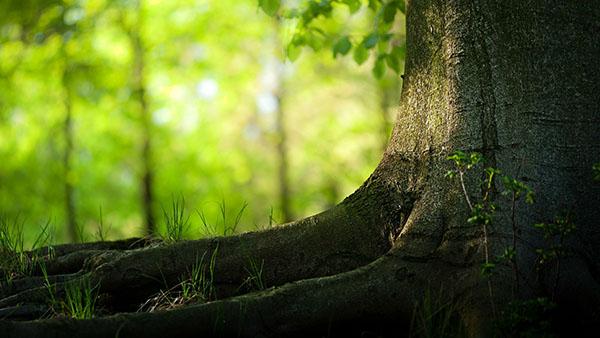 mitologija-drveca7