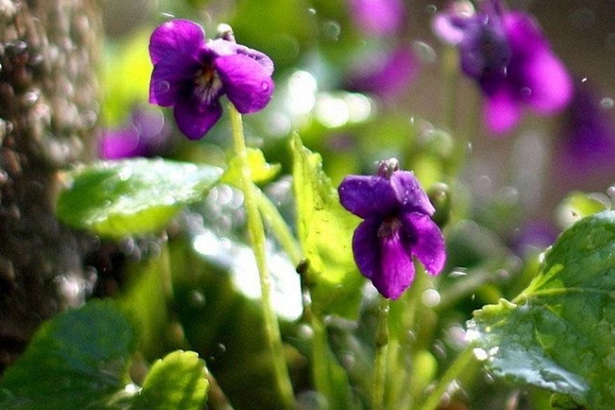 Proljetna pjesma...