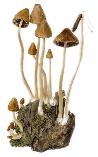 gljive (beatrix potter)