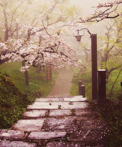 japanska-tresnja-i-park