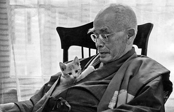 Suzuki i mačka