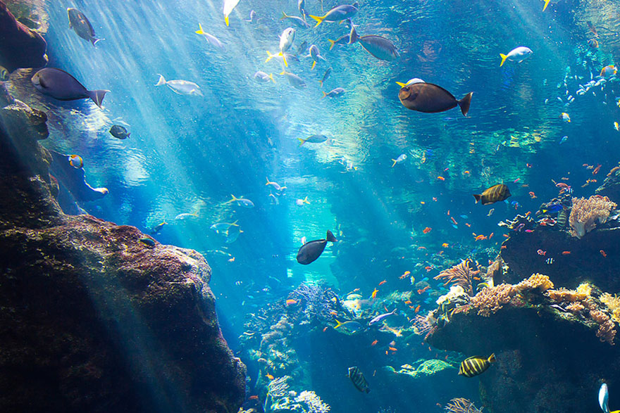Zarobljeno more