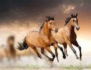 Konji u trku