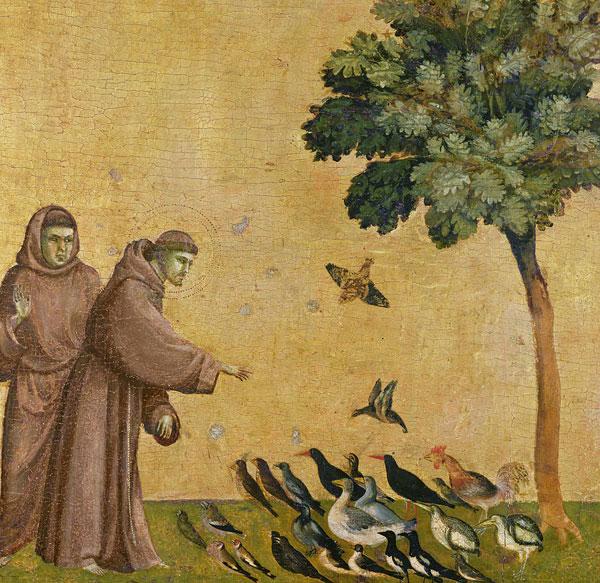 Ptice-SvFranjo