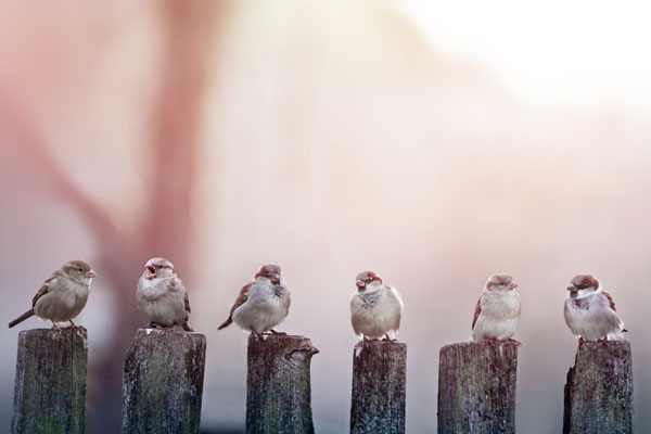 Ptice-Vrapci