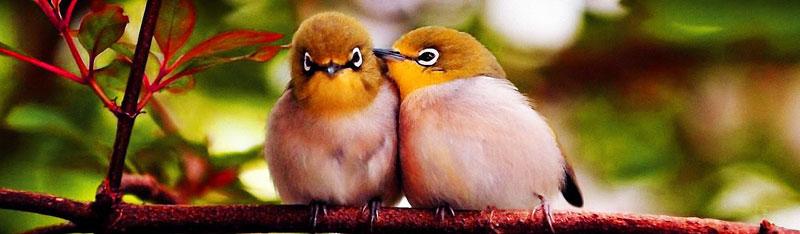 Ptice-dvije-ptice