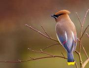 Ptice-naslovna