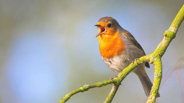 Ptice-ptica-grana