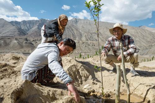 Sonam-Wangchuk-sadnja-stabala