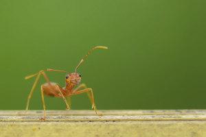 orijentacija-mravi-mrav