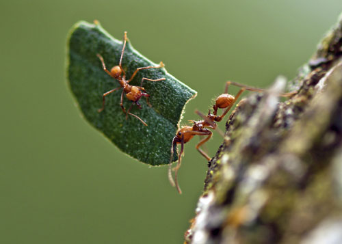 orijentacija-mravi-mrav-i-list