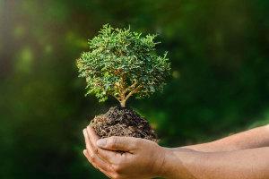 nova-godina-stablo-ruke