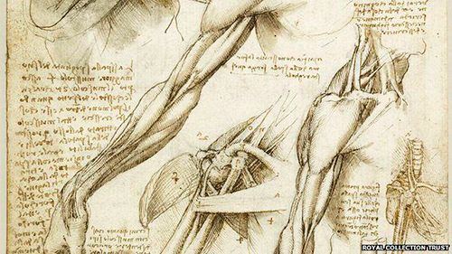 7-principa-muskulatura