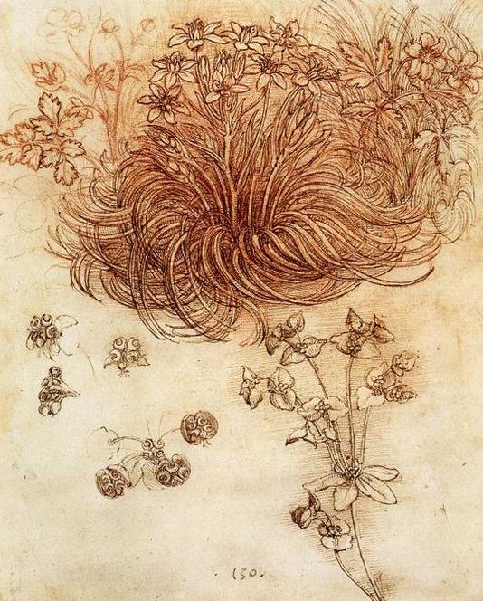 Leonardo-Da-Vinci---Biljka