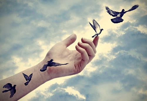 Sto-znaci-biti-slobodan-ptica