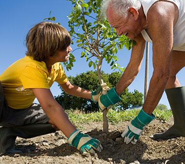 bolji-svijet-sadnja-drveta
