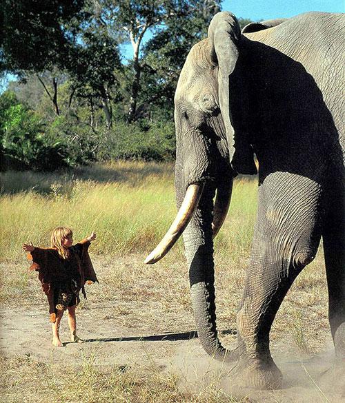 Tippi4-slon