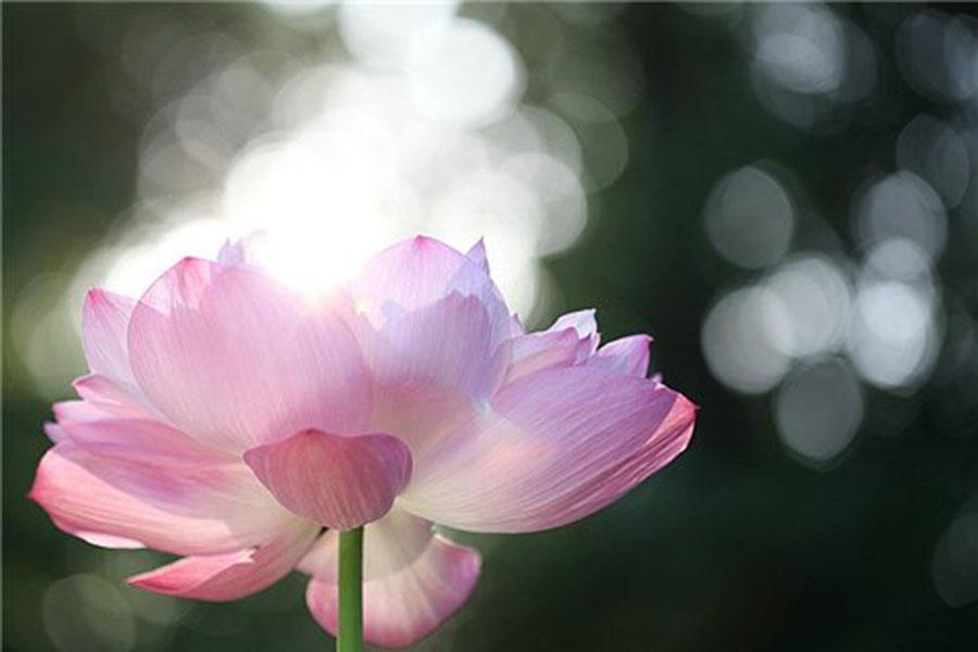 nutarnja-cistoca-lotus