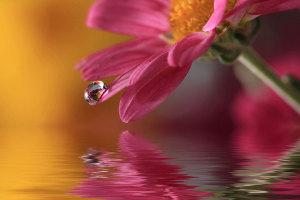 Danas-sam-vidjela-kapljicu-vode-cvijet-i-kapljica