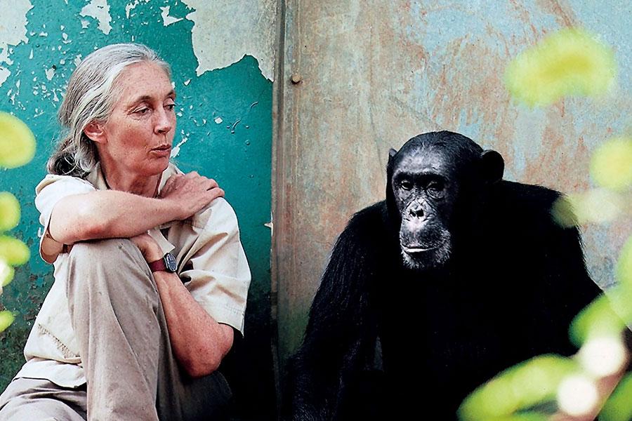 Jane-Goodall-3