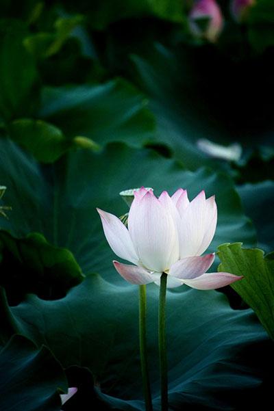 citat-lotos