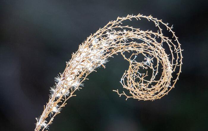 zlatni-rez--spirala