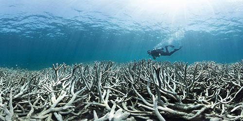 kolapsologija-ocean