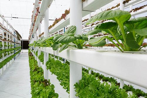 znanost-silvito-napreduje-uzgoj-biljaka