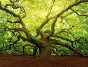 Hrast-stablo-naslovna